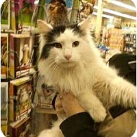 Adopt A Pet :: Mr. Magoo - Troy, OH