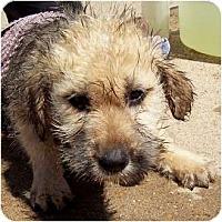 Adopt A Pet :: Nutmeg - courtesy post - Glastonbury, CT