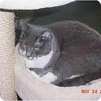 Adopt A Pet :: Misty - Pendleton, OR