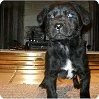 Adopt A Pet :: Jillian - Glastonbury, CT