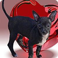 Adopt A Pet :: Onyx 2.5 pounds - Sacramento, CA
