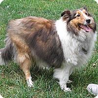 Adopt A Pet :: Sonny - Abingdon, MD