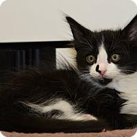 Adopt A Pet :: Prince Eric - Davis, CA