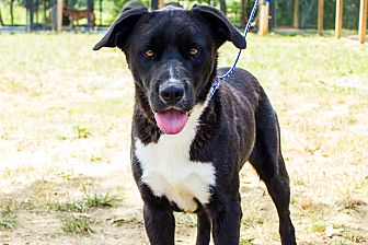 Labrador Retriever Mix Dog for adoption in Jasper, Alabama - Happy