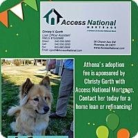 Adopt A Pet :: Athena - Fincastle, VA
