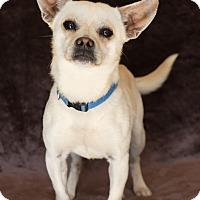 Adopt A Pet :: Bobby - Yucaipa, CA