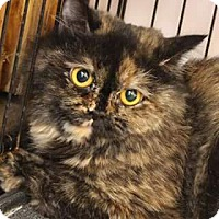 Adopt A Pet :: Noona - Ennis, TX