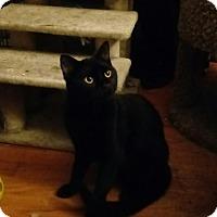 Adopt A Pet :: Wade - Waldorf, MD