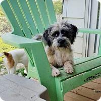Adopt A Pet :: Daisy - Adoption Pending! - Hillsboro, IL