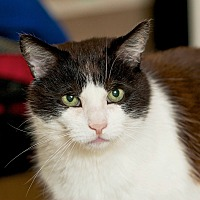 Adopt A Pet :: Leo - Coronado, CA
