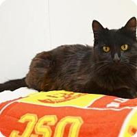 Adopt A Pet :: *WHEELER - Sacramento, CA