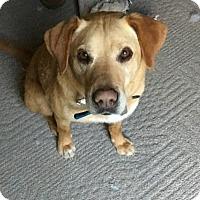 Adopt A Pet :: Sweet Peanut - Winfield, PA