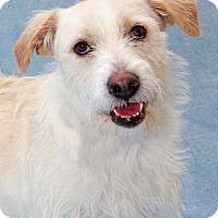 Adopt A Pet :: Wager - Encinitas, CA