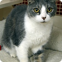Adopt A Pet :: Bobbi Flufferton - Richmond, VA