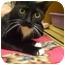 Photo 1 - Domestic Shorthair Cat for adoption in Orlando, Florida - Fiona