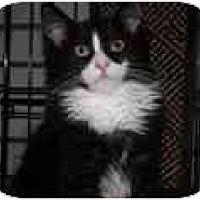 Adopt A Pet :: Mooshi & Junior - Lake Ronkonkoma, NY