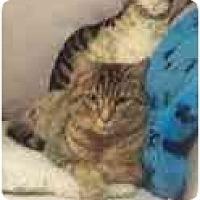 Adopt A Pet :: Josie - Arlington, VA
