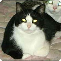 Adopt A Pet :: Hanna - Montreal, QC