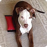 Adopt A Pet :: Max - Nashua, NH