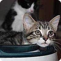 Adopt A Pet :: Echo - Montreal, QC