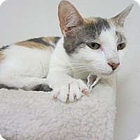 Adopt A Pet :: Penelope - Bunnell, FL