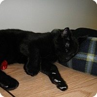 Adopt A Pet :: Knight - Milwaukee, WI