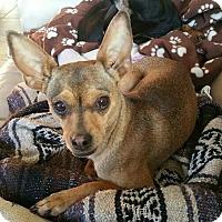 Adopt A Pet :: Coral - Oceanside, CA