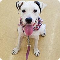 Adopt A Pet :: Everett - Tampa, FL