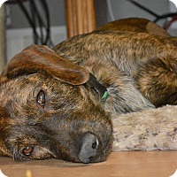 Adopt A Pet :: Ashley - Alpharetta, GA