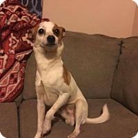 Adopt A Pet :: Sonic - Newport, KY