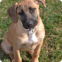 Adopt A Pet :: Jan - New Oxford, PA