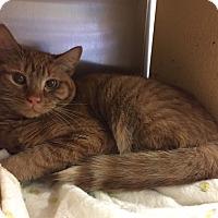 Adopt A Pet :: Dozer - Manchester, CT