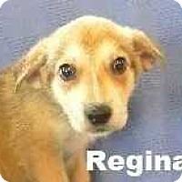 Adopt A Pet :: Regina - Woodstock, GA