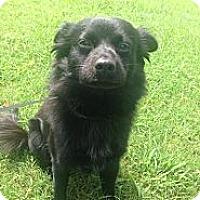 Adopt A Pet :: Remi - Braintree, MA