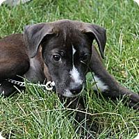 Adopt A Pet :: Baby Jewel - Marlton, NJ