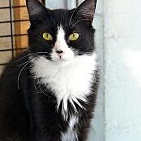 Adopt A Pet :: Pixie - Wellesley, MA