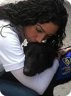 Labrador Retriever Mix Dog for adoption in Long Beach, New York - Bentley