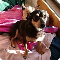 Adopt A Pet :: Pablo - Carthage, NC