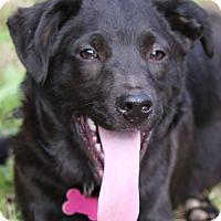 Adopt A Pet :: Jax - Cedartown, GA
