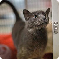 Adopt A Pet :: Dundee2 - Raleigh, NC