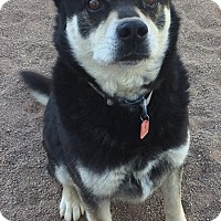 Adopt A Pet :: Lakota - Denver, CO