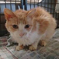 Adopt A Pet :: Norton - Ashtabula, OH
