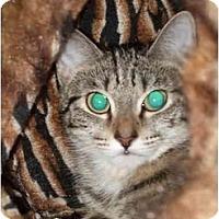 Adopt A Pet :: Lizzie - Fort Lauderdale, FL