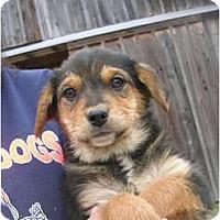 Adopt A Pet :: Willa - Glastonbury, CT