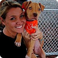 Adopt A Pet :: Stag - Orlando, FL