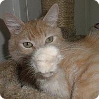 Adopt A Pet :: Butterscotch - Phoenix, AZ