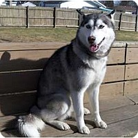 Adopt A Pet :: Xena - Belleville, MI