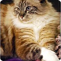 Adopt A Pet :: Crystal - Encinitas, CA
