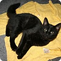 Adopt A Pet :: Fabian - Alexandria, VA