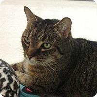 Adopt A Pet :: Harley James - Byron Center, MI
